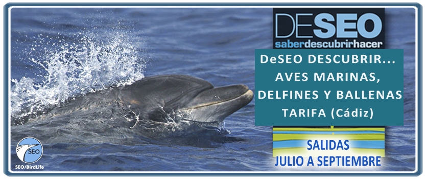 Tarifa, Delfines, Ballenas, SEO/BirdLife, SEO, Aves, Pájaros