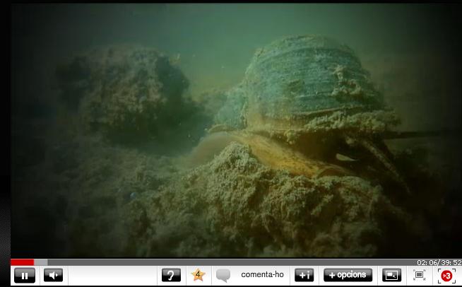 Fotograma del documental 'Invasors', de TV3, sobre el caracol manzana en el Delta del Ebro.