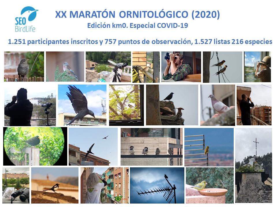 El XX maratón ornitológico en cifras.